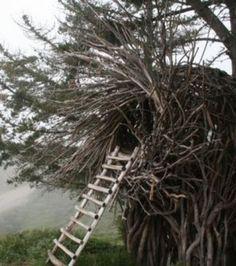 Bienvenue à l'intérieur d'un nid… pour humain!