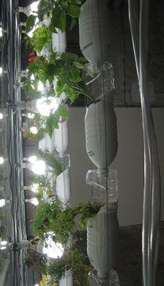 Create your own hydroponic window farm