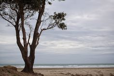The famous 90 mile beach in Northland New Zealand.though it is only about 55 miles. Serenity for sure in this place! New Zealand North, Us Travel, Serenity, The Good Place, National Parks, Environment, Open Spaces, Island, Explore