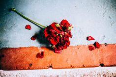 Ένα κόκκινο λουλούδι 'πληγωμένο'... το τέλος μιας σχέσης! #arive #photo #20_05_2014 #flower http://ow.ly/x2DGw