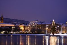 Purple Christmas in Bergen, Norway