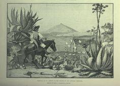 The Illustrated London News. London: Illustrated London News & Sketch Ltd., 1842-  p. 260 de 1890