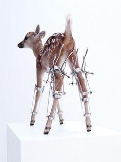 motohiko odani erecto bambi 2003