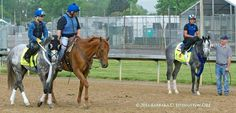 """Two of the """"Derby Grays"""" . Mohaymen & Creator. Thoroughbreds"""