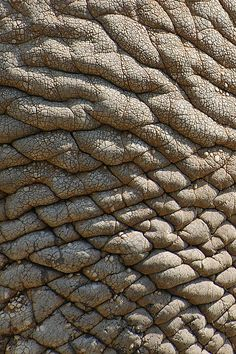 real elephant skin, texture for layer by † David Gunter, via Flickr