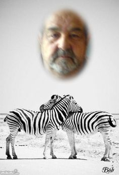 Hugging Zebras