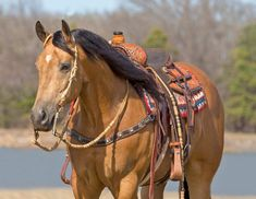 American Quarter Horse, Horse Tack, Beautiful Horses, Beautiful Pictures, Paint Horses, Horse Stuff, Cow, Painting, Animals