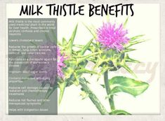 Milk Thistle is pretty dang amazing. I use it to boost my glutathione levels and help my liver flush out toxins, hormones and chemicals. Works great to reduce LDL (bad) cholesterol, weight loss by upping bile production and discouraging fatty deposits, PMS by purging liver of hormones, toxins for pretty skin/hair/nails etc. I get the Nature's Way Brand from Whole Foods and take 1 pill at night. Oh, also great for hangovers too!! :) #ReinventYourselfWithLizzy #MilkThistle