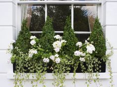 Topiary window box from Modern Country Style blog: How To Use Topiary In A Modern Country Garden
