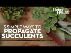 Learn how to propagate succulents the quick and easy way. Our post has lots of helpful tips and tricks and a video tutorial to show you how.