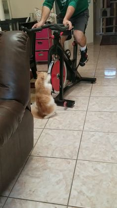 funny cat video, cat memes Source by Cuteoverloaded videos wallpaper cat cat memes cat videos cat memes cat quotes cats cats pictures cats videos New Memes, Funny Cat Memes, Funny Animal Videos, Cute Funny Animals, Funny Animal Pictures, Cute Baby Animals, Funny Cute, Cute Cats, Memes Humor