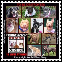 TO BE DESTROYED 06/09/17