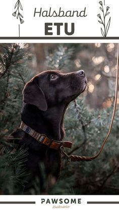 In unserer Werkstatt in Wien fertigen wir jede Leine und jedes Halsband für deinen Hund von Hand an. Verrate uns einfach die gewünschten Maße, wähle deine liebsten Farben und Materialen aus und wir stellen dein individuelles Produkt her. Pawsome | Nachhaltiges Hundezubehör | Halsband und Leine | Hundehalsband selber machen Dog Grooming, Labrador Retriever, Cats, Animals, Dog Leash, Dog Accessories, Pooch Workout, Linen Fabric, Handmade