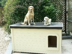 Jute & Barley - UK:  several years of being tried and tested, this dog house has been proven to be the most comfortable and the safest home you can build for your beloved dogs.
