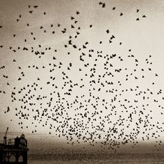 Birds Flying - I love it when they fly like this...