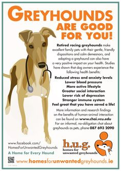 Greyhounds will help you stay active and lower stress levels!  Not to mention they are adorable and loving companions.