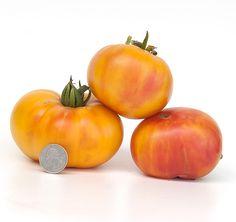 Rozella | Heritage Tomato Seed