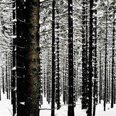 Woodlands - Mat Hennek