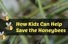 Tutorial: Make a Bee Condo - and 5 ways kids can help save the honeybees