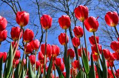 Red Tulips - https://www.youtube.com/watch?v=bxg5Ygck0Po  Thanks to everyone