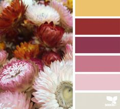 Blurb ebook: Design Seeds Color Almanac by Jessica Colaluca Hue Color, Colour Pallette, Colour Schemes, Color Combos, Color Patterns, Pantone, Design Seeds, Color Swatches, Color Of Life