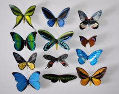 3D Butterfly Magnets, Insects, Refrigerator Magnets Set of 12, Handmade, Home Decor, Gifts, by dougwalpusartstudio. Explore more products on http://dougwalpusartstudio.etsy.com