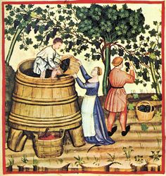 Angevin winemakers in the Middle Ages were one of the few Medieval producers to blend both the vin de goutte (free run juice) with the vin de presse Medieval Life, Medieval Art, Medieval Manuscript, Illuminated Manuscript, Renaissance, History Of Wine, Wine Press, Art Antique, Back In The Game