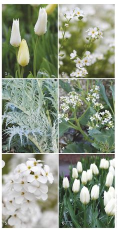 Articles - The White Garden Series - Kennedy Song Dusoir Moon Garden, Night Garden, Forest Garden, Nature Plants, Garden Plants, Beautiful Gardens, Beautiful Flowers, White Gardens, Flower Planters