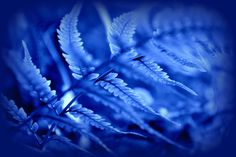 Blue Fern Frond by Nate A on 500px