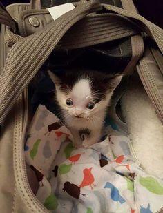 Super Hero The Hydrocephalic Cat zeke