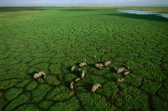 Elephant Fields