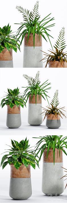 Plant -7