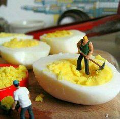 Egg construction