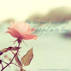 Made everything beautiful