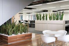 office plants - Google-haku