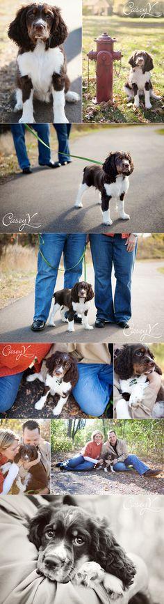 pet photographi, pet pose, pet portraitur, pet photography poses