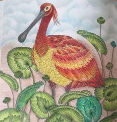 Millie Marotta Tropical Wonderland Adultcoloringbook