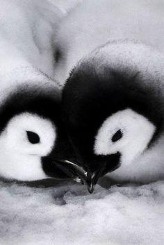 PENGUIN'S CUTE LITTLE FACES