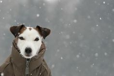 Reminds me of my Jack Russell...aww..