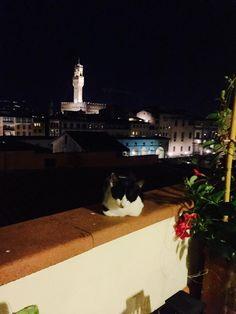 Art Thou, Night Owl, Rome, Animals, Animales, Animaux, Animal, Animais, Rome Italy
