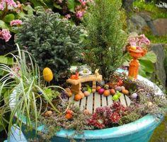 Mini Fruit Garden