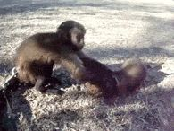 Monkey And Puppy Hug It Out