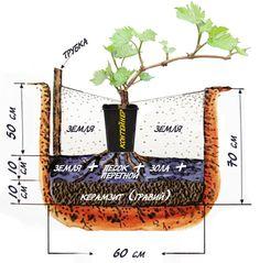 16 more Pins for your Садівництво board Vegetable Garden Planning, Home Vegetable Garden, Herb Garden, Grafting Plants, Grape Plant, Garden Sink, Summer House Garden, Banana Plants, Growing Roses