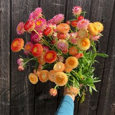 to a spectacular fall day when our strawflowers enjoyed a shining moment in the sun before they headed to - can you spy them in her new book Bouquets? Autumn Day, Fall, Spy, New Books, Farmer, Bouquets, Virginia, Studios, Floral Wreath