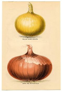 Instant Art Printable - Vintage Onions - The Graphics Fairy