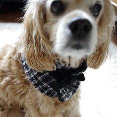 귀엽고 시크한 강아지 고양이 옷 코콜라 | 트위드 넥 워머 출시했어요