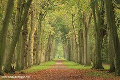 Forrest in autumn