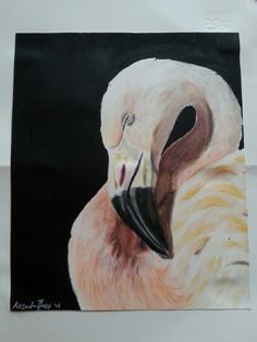 Realistic flamingo with Prismacolor coloured pencils