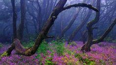 La selva encantada  © Francisco Mingorance