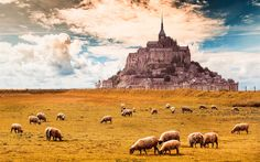 Descargar fondos de pantalla Mont-Saint-Michel, campo, ovejas, castillo, Normandía, Francia